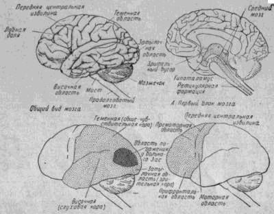 Б. Второй блок мозга В. Третий